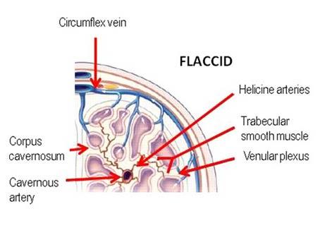 Flacid state